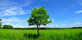 Green tree and blue sky — Stock Photo