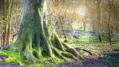 Paysage de forêt — Photo