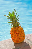 A delicious pineapple by the pool — Foto Stock