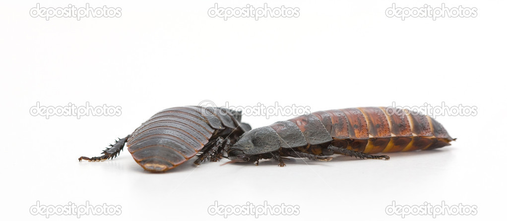 Huge insects  Stock Photo #6543576