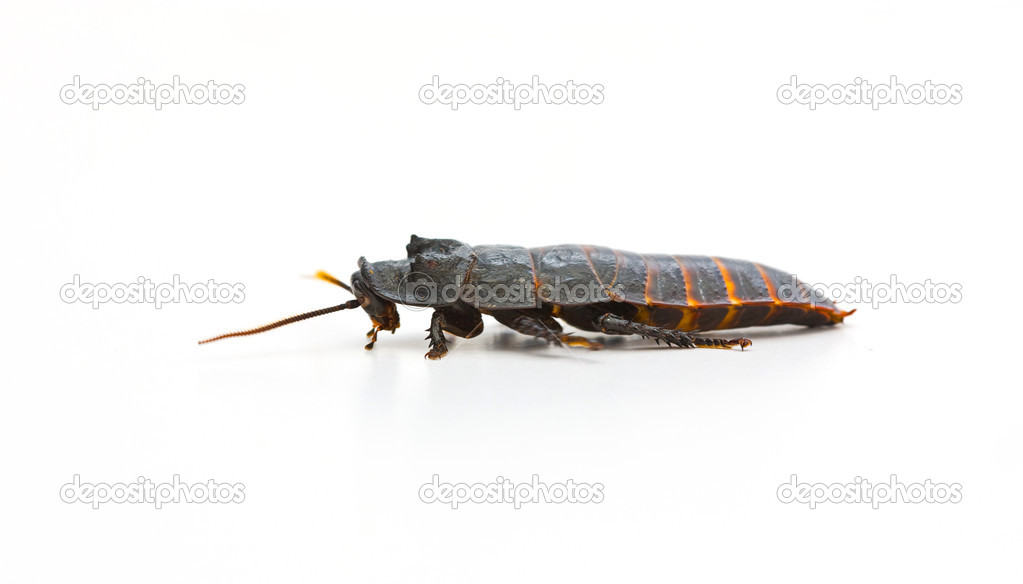 Huge insects — Stock Photo #6543708