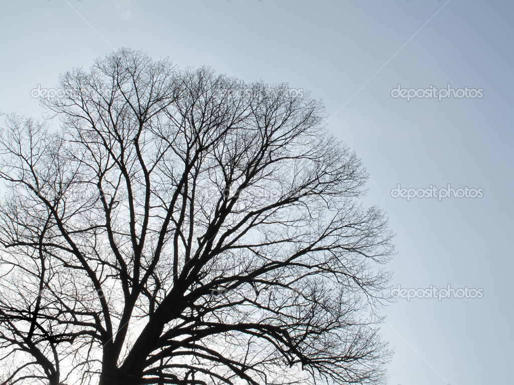 Winter tree- useful as background                          — Stock Photo #6543867