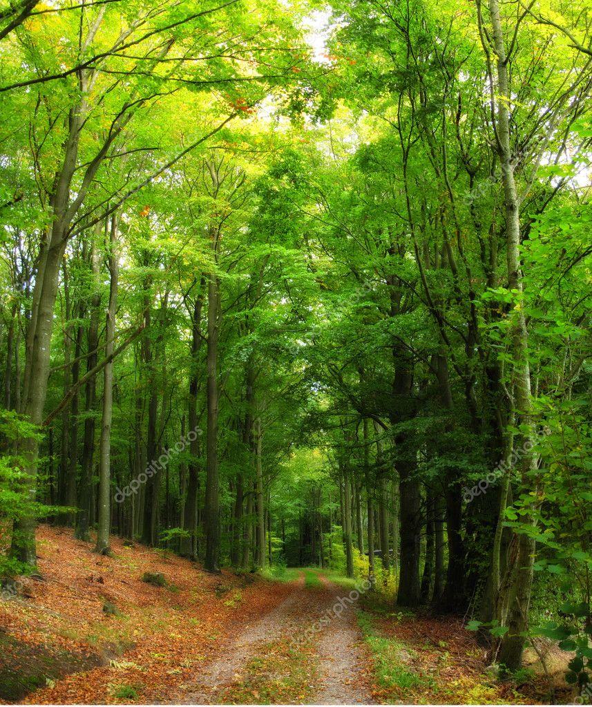春天的森林中