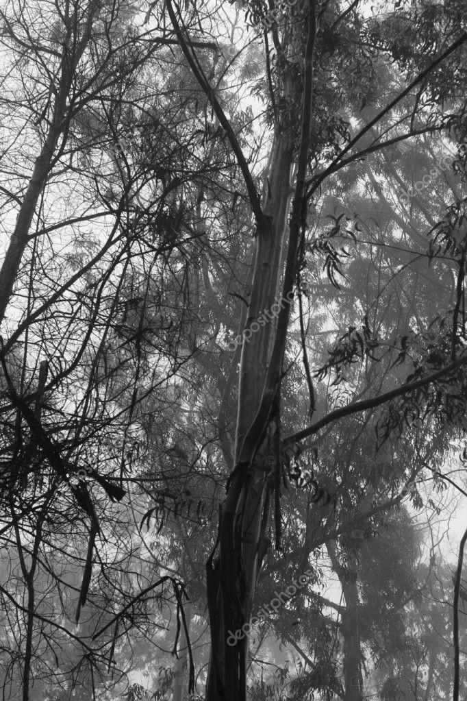 Black And White Misty : Black tree and white misty background — stock photo