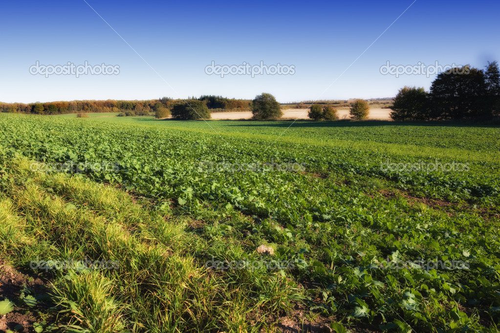 Lush green farmland in early springtime   Stock Photo #6545067