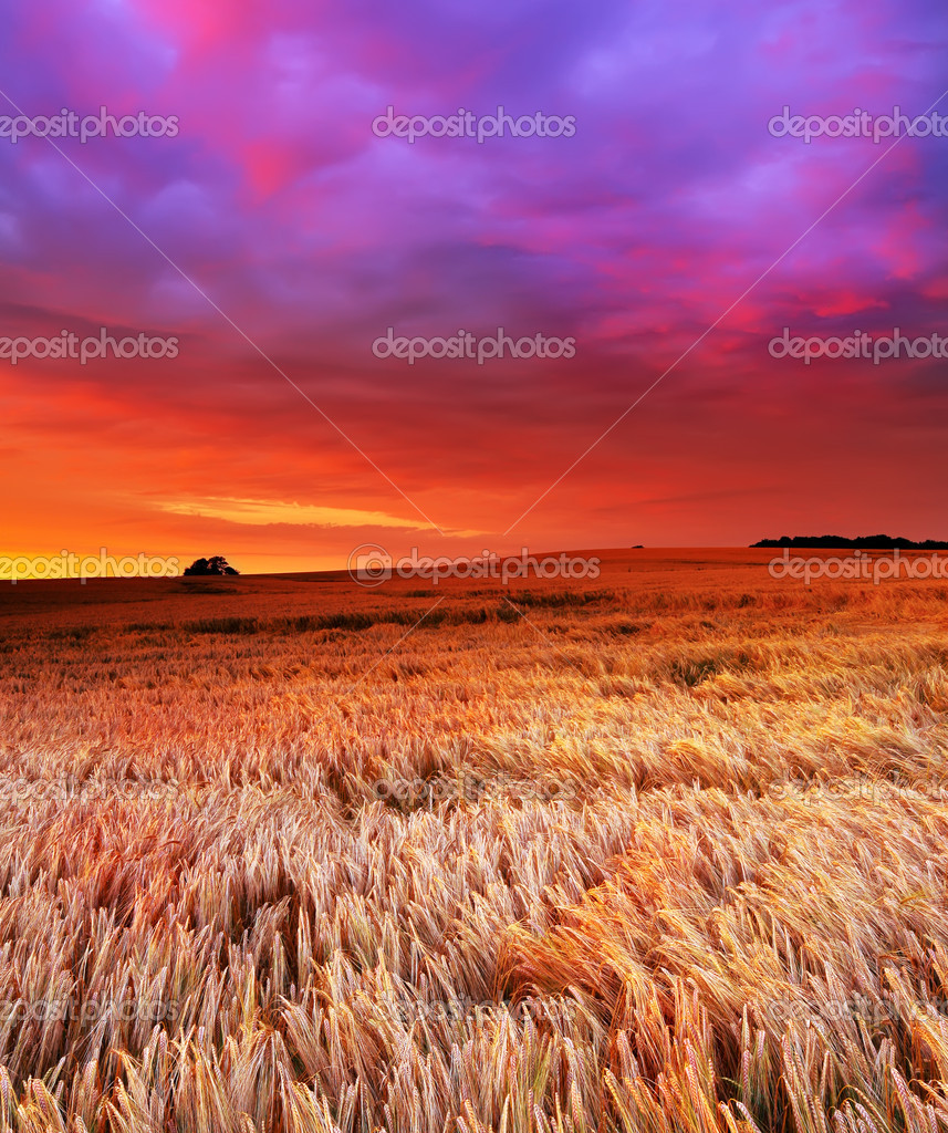 A photo of the countryside at sunset — Stock Photo #6547449