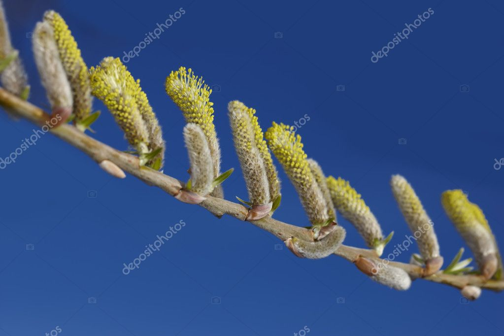 New life in clean environment - spring buds, flowers, and green leaves — Stock Photo #6547635