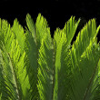 Leaf of palm — Stock Photo