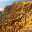 Torrey Pines - California - Stock Photo