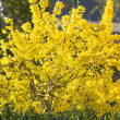 Yellow spring flower — Stock Photo #6552245