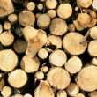 Woodpile — Stock Photo #6557176