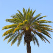 Palm on uniform background (not isolation) — Photo