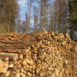 Woodpile — Stock Photo #6557227