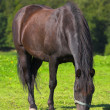 Photo of horse in sunny day - Stock Photo
