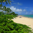 Photo of tropical beach — Stock Photo