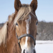 Photo of horse in wintertime a sunny day — Stock Photo