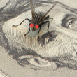 Macro of fly on a bill — Stock Photo