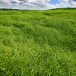 Farmland - Stock Photo