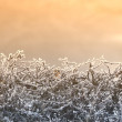 An early morning photo of haze winter landscape — Stock Photo #6558206