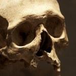 Human skull — Photo
