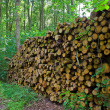 Woodpile — Stock Photo #6558304