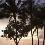 Tropical beach — Stock Photo #6558421