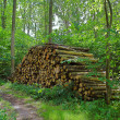 Woodpile — Stock Photo #6558522