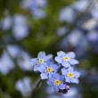 Flowers in my garden — Stock Photo