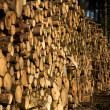 Woodpile — Stock Photo #6558722