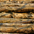 Pile of timber - Stock Photo