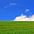 Green, sun and sky — Stock Photo