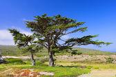 African savanna — Stock fotografie