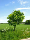 Beautiful countryside landscape in Denmark — Stock Photo