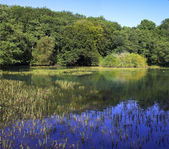 Lago della foresta in scandinavo — Foto Stock