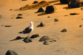 Photo of sea gull — Stock Photo