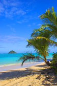 Photo of tropical beach with palms — Stock Photo