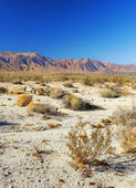 Panorama view of North American desert — Stock Photo