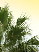 Palm on warm summer day — Stock Photo