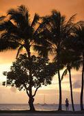 Tropical beach — Stock Photo