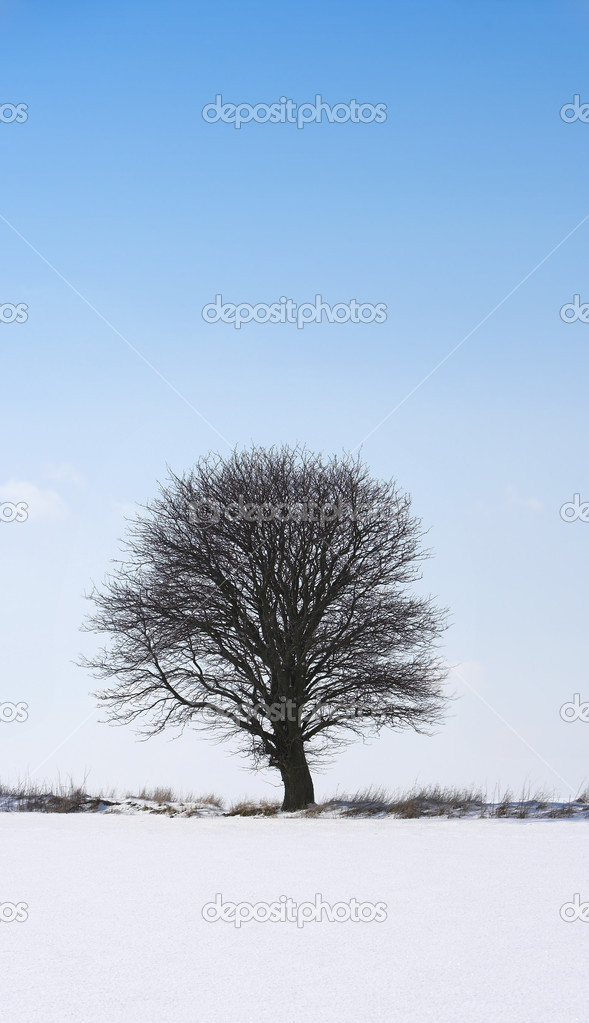 Winter tree — Stock Photo #6557812