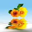 Yellow roses reflecting in water with ripples — Stock Photo
