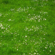 Lawn flowers — Stock Photo #6560872