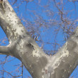 A photo of a tree in winter time — Stock Photo #6561128