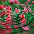 Rippled flowers — Stock Photo