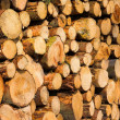 Woodpile — Stock Photo