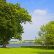 Stock Photo: Trees in park