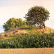 Ancient Danish burial mound — Stock Photo