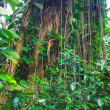 Rainforest — Foto Stock