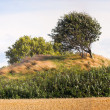 Ancient Danish burial mound - Stock Photo