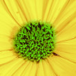 Yellow flower dreams — Stock Photo #6562023